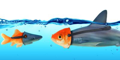 fishindisguise