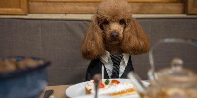 dogdressedup