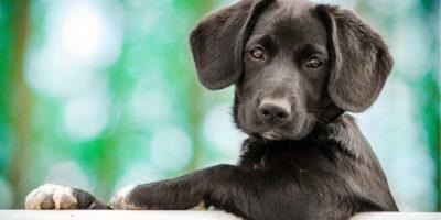 dog, cute