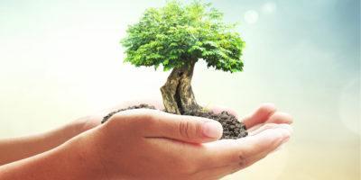 hands, tree