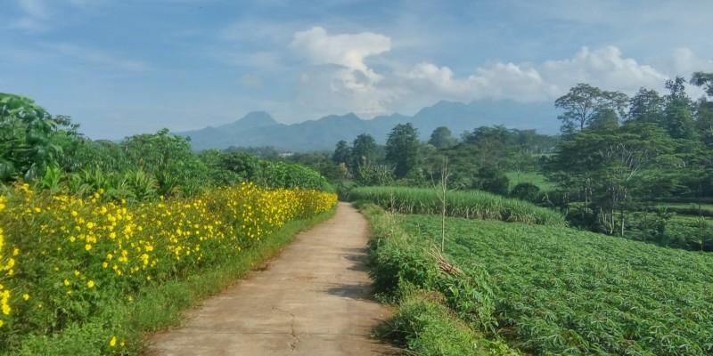 path, mountains