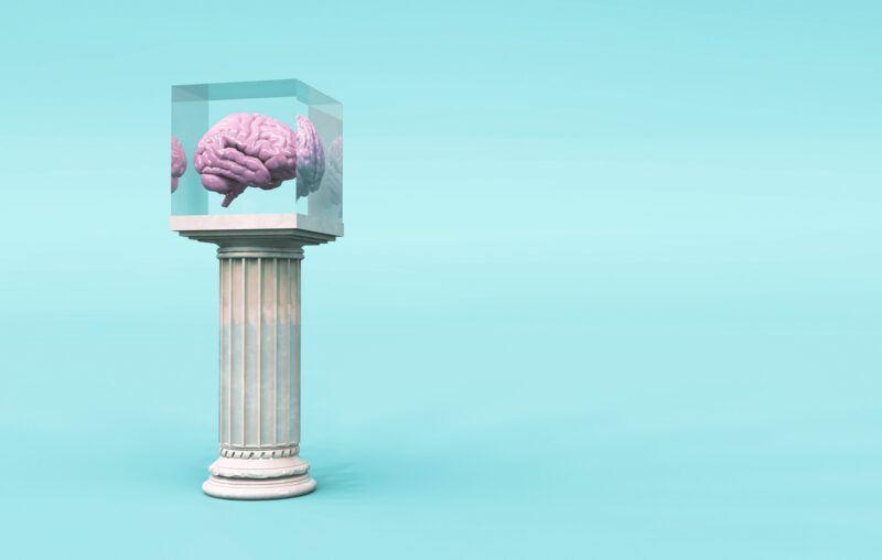 brain, pedestal